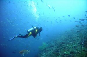 Faszinierende Unterwasserfotografie